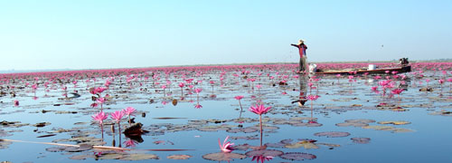 Red Lotus Sea or Talay Bua Daeng